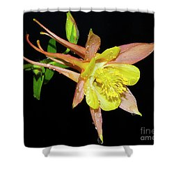 Spring Flower Shower Curtain by Elvira Ladocki