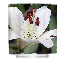 White Lily Shower Curtain