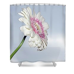 Beautiful Gerber Shower Curtain by Elvira Ladocki