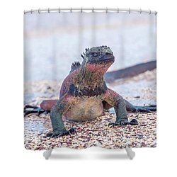 Marine Iguana On Galapagos Islands Shower Curtain by Marek Poplawski