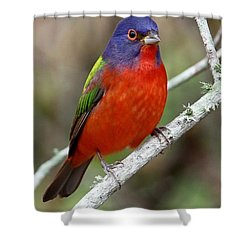 Painted Bunting Shower Curtain
