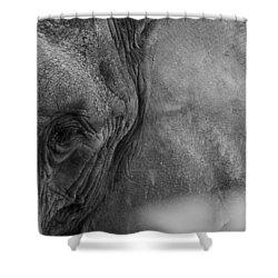 African Elephant  Shower Curtain by Kevin Blackburn