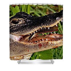 American Alligator Shower Curtain