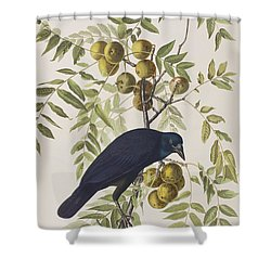 American Crow Shower Curtain
