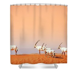 Shower Curtain featuring the photograph Arabian Oryx by Alexey Stiop