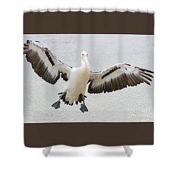 Australian Pelican Shower Curtain