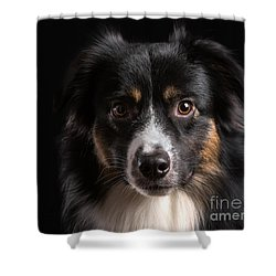 Australian Shepherd Shower Curtain by Verena Matthew