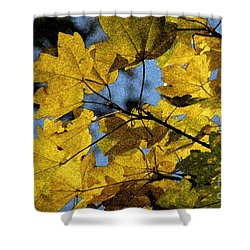 Shower Curtain featuring the photograph Autumn Leaves by Jean Bernard Roussilhe
