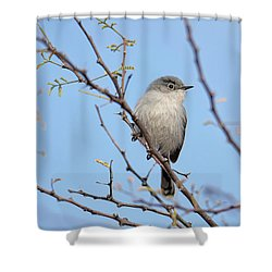Black-tailed Gnatcatcher Shower Curtain