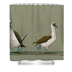 Blue Footed Boobies Shower Curtain by Juan  Bosco