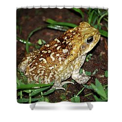 Shower Curtain featuring the photograph Cane Toad by Breck Bartholomew