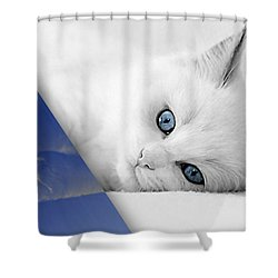Cat Collection Shower Curtain