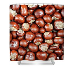 Conkers Shower Curtain