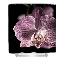 Close Up Shoot Of A Beautiful Orchid Blossom Shower Curtain by Ulrich Schade