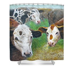 3 Cows Shower Curtain
