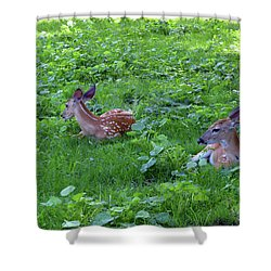 3 Deer Shower Curtain by Diane Lent