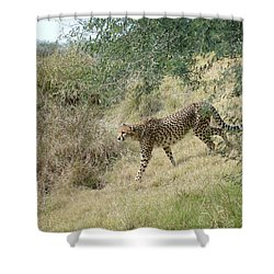 Shower Curtain featuring the photograph Descent by Fraida Gutovich