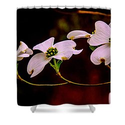 3 Dogwood Blooms On A Branch Shower Curtain