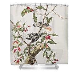 Downy Woodpecker Shower Curtain by John James Audubon