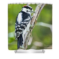 Shower Curtain featuring the photograph Downy Woodpecker  by Ricky L Jones