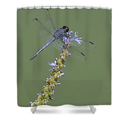 Dragon Fly Shower Curtain by Linda Geiger