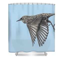 European Starling Shower Curtain