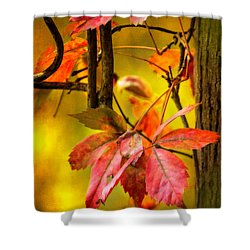 Shower Curtain featuring the photograph Fall Colors by Eduard Moldoveanu