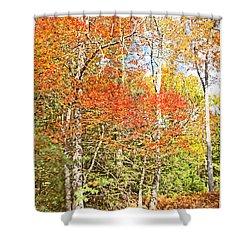 Shower Curtain featuring the digital art Forest Interior Autumn Pocono Mountains Pennsylvania by A Gurmankin