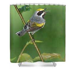 Golden-winged Warbler Shower Curtain