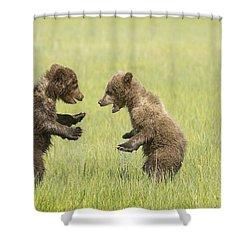 Grizzly Bear  Ursus Arctos Horribilis Shower Curtain by Daisy Gilardini