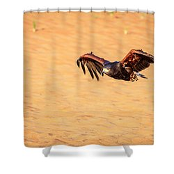 Shower Curtain featuring the photograph Harris Hawk by Alexey Stiop