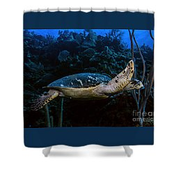 Hawksbill Turtle Shower Curtain
