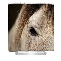 Horse Portrait Shower Curtain by Ian Middleton