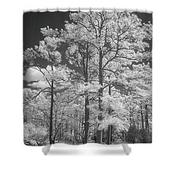 Hugh Macrae Park Shower Curtain by Denis Lemay