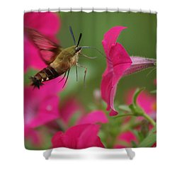 Hummer Moth Shower Curtain