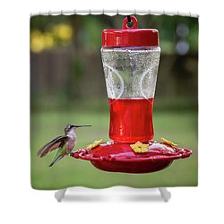 My Sweet Hummingbird Shower Curtain by Denis Lemay