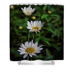 Shower Curtain featuring the photograph 3 In A Row by Cherie Duran