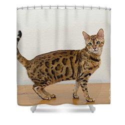 3 Shower Curtain