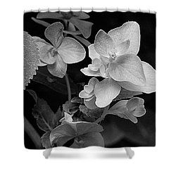 Magnolia Plantation And Gardens Collection Shower Curtain by DigiArt Diaries by Vicky B Fuller