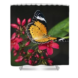 Malay Lacewing Butterfly  Shower Curtain by Saija Lehtonen