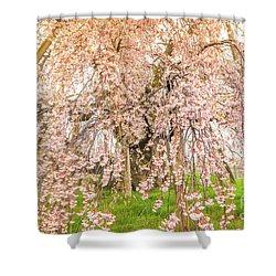 Shower Curtain featuring the photograph Miharu Takizakura Weeping Cherry04 by Tatsuya Atarashi