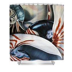 3 Nautilus Shower Curtain