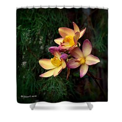 No Title Shower Curtain by Edgar Torres