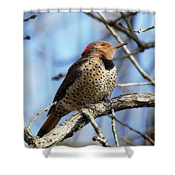 Northern Flicker Woodpecker Shower Curtain