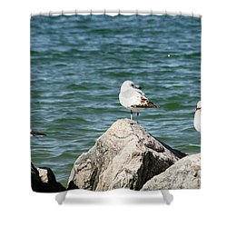 Shower Curtain featuring the photograph 3 Of Them At Sea by Paul SEQUENCE Ferguson             sequence dot net