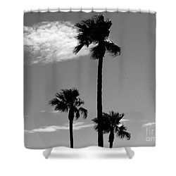 3 Palms Shower Curtain by Janice Westerberg