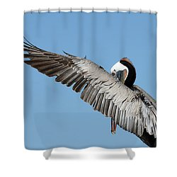 Peeking Through Shower Curtain by Fraida Gutovich