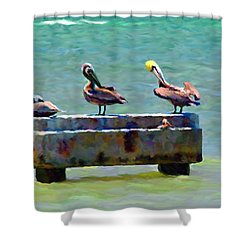 3 Pelicans Shower Curtain