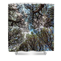 Pinewood Forest, Cecina, Tuscany, Italy Shower Curtain
