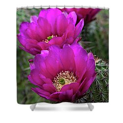 Shower Curtain featuring the photograph Pink Hedgehog Cactus  by Saija Lehtonen